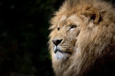 测你是什么类型的河东狮