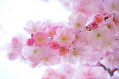 你的桃花特质关键词是什么?