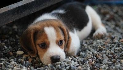 你了解多少狗狗的种类?